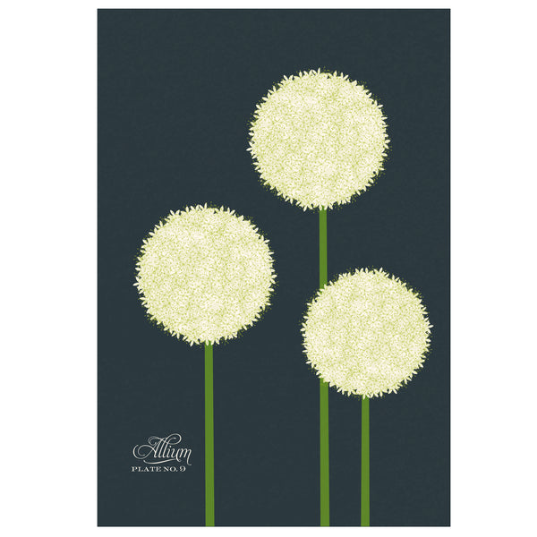 Allium Art Print