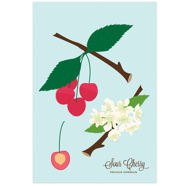 Sour Cherry Art Print