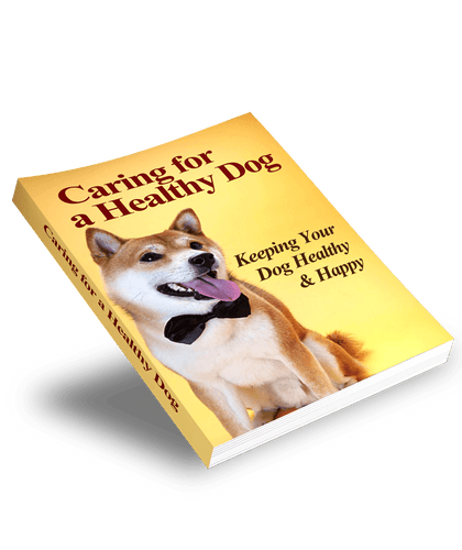 The KedStore Caring for a Healthy Dog | Keeping your Dog Healthy & Happy
