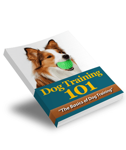 The KedStore Dog-Training-101