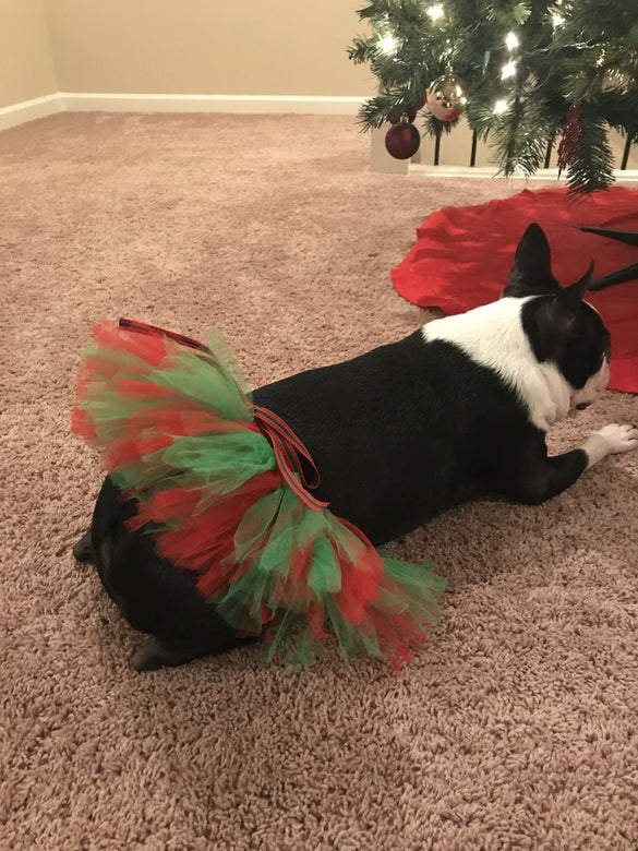 Red and Green Pet Tutu Skirt | XS-XXXL