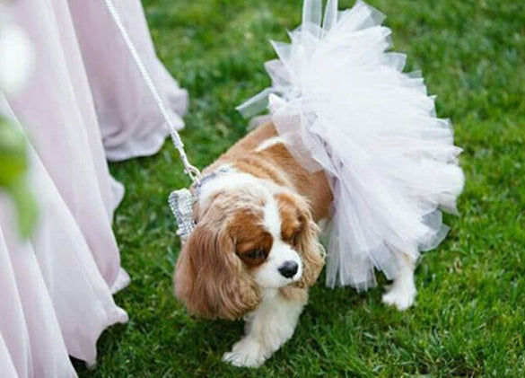 White Bridal Pet Tutu Skirt | XS-XXXL