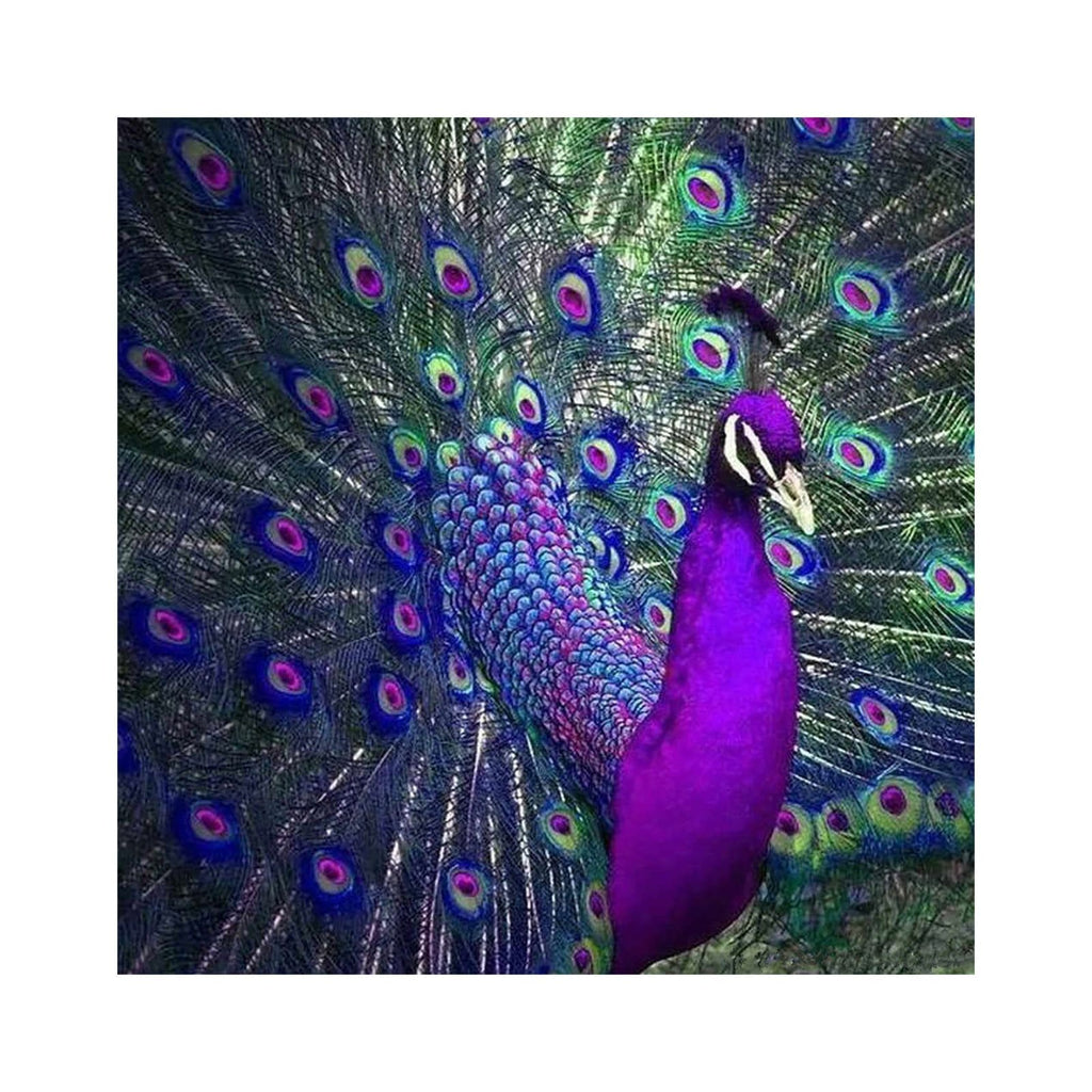 5D DIY Diamond Painting Kit - Purple Peacock