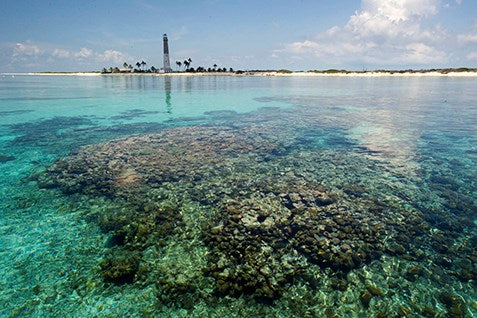 Little Africa Reef | Visit Dry Tortugas NP | Things To Do In Florida | Photo Credit to NPS.GOV