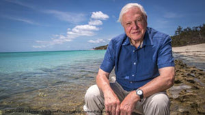 The 'Attenborough Effect': Consumers Ready To Ditch Plastic