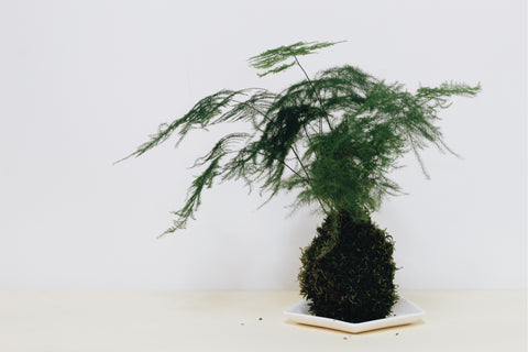 Franklin Kokedama Art Workshop