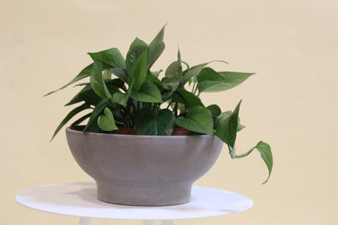 Dark Basalt Low Bowl Planter