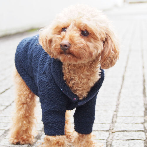 A dog wearing shawl collar cardigan