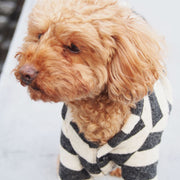 A dog wearing cardigan