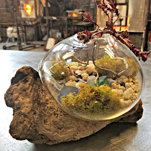 Blown Glass Terrariums - Saturday, April 25