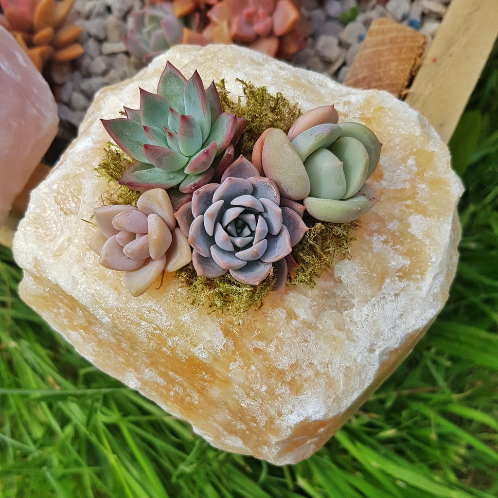 Orange Calcite Crystal Succulent Planter