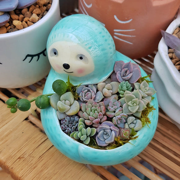 Sloth Succulent Arrangement