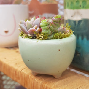 Tiny Succulent Arrangement