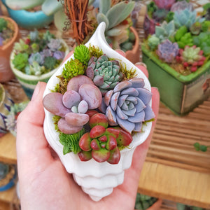 Seashell succulent arrangement