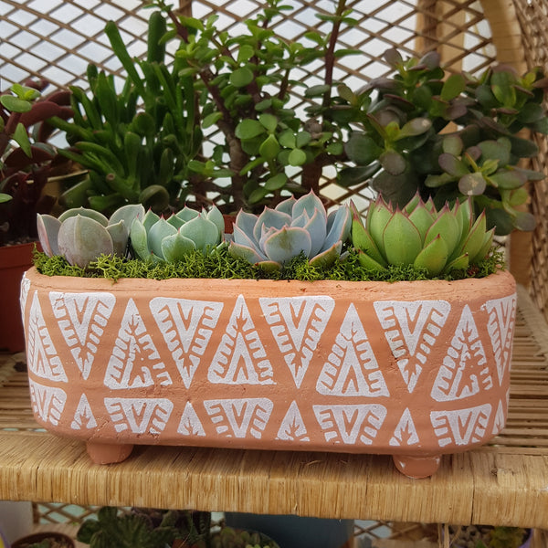 Terracotta Trough planted with 3 Echeveria
