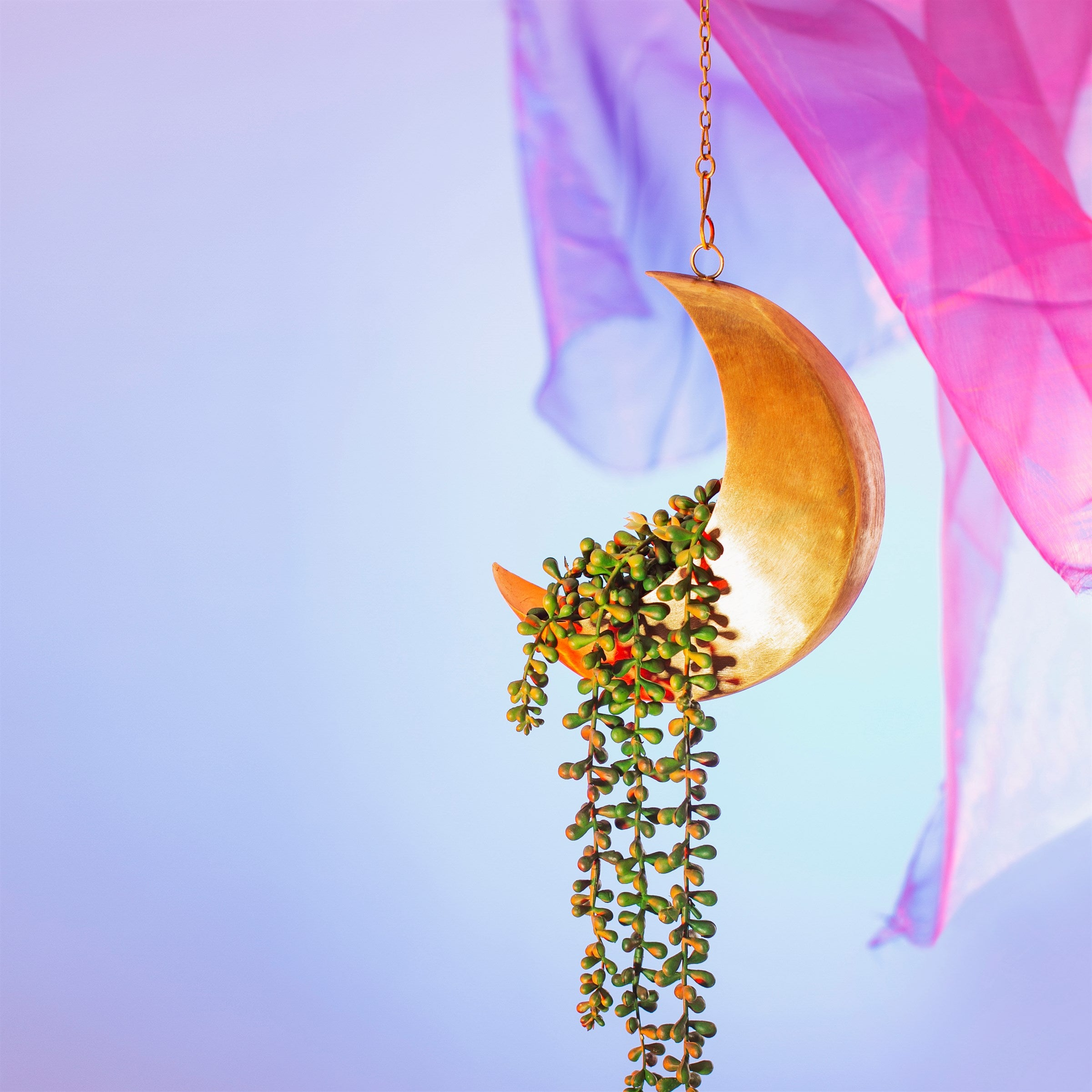 Gold Moon Hanging Planter
