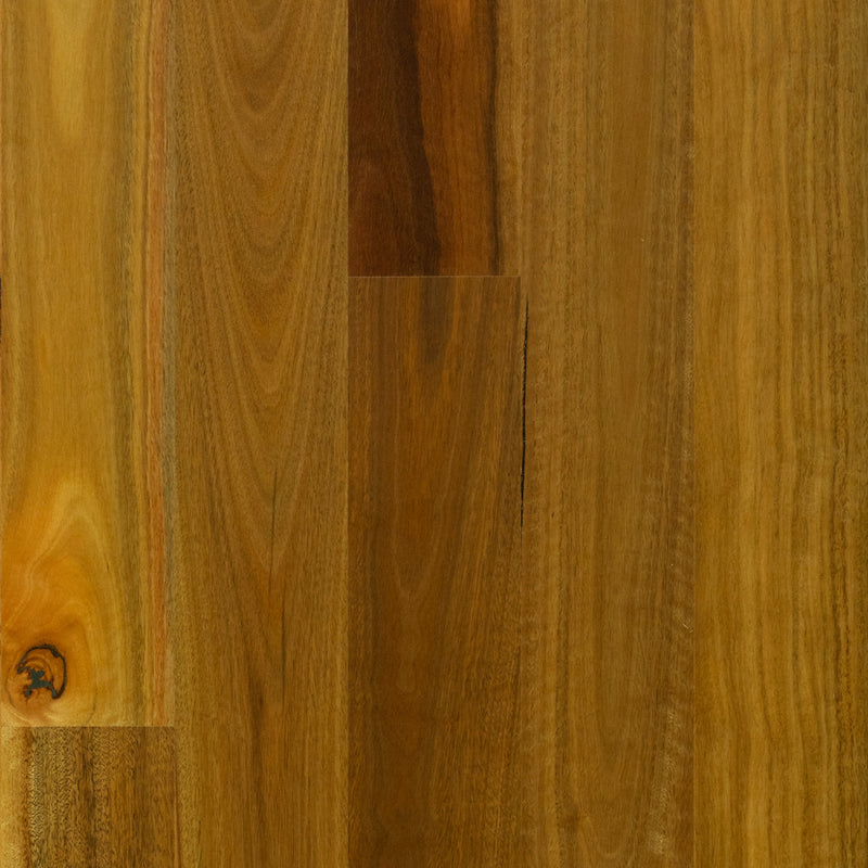 Spotted Gum - Smooth Matte