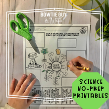 Load image into Gallery viewer, Life Cycle of a Plant SCIENCE NO PREP PRINTABLES FREEBIE