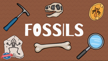 Load image into Gallery viewer, Fossils Student Information Video
