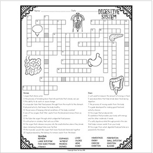 Digestive System Crossword