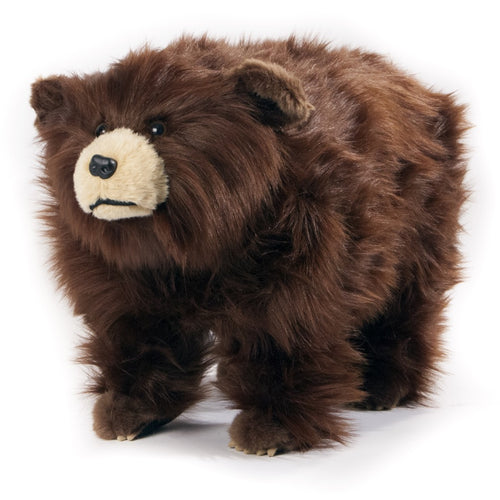 Griz shaggy brown bear