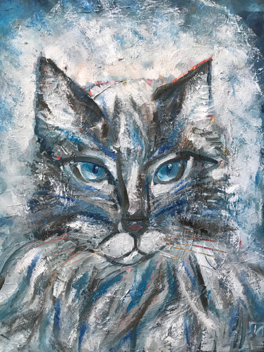 Cat with blue eyes, oil on canvas