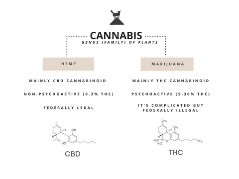 cannabis cbd hemp vs marijuana