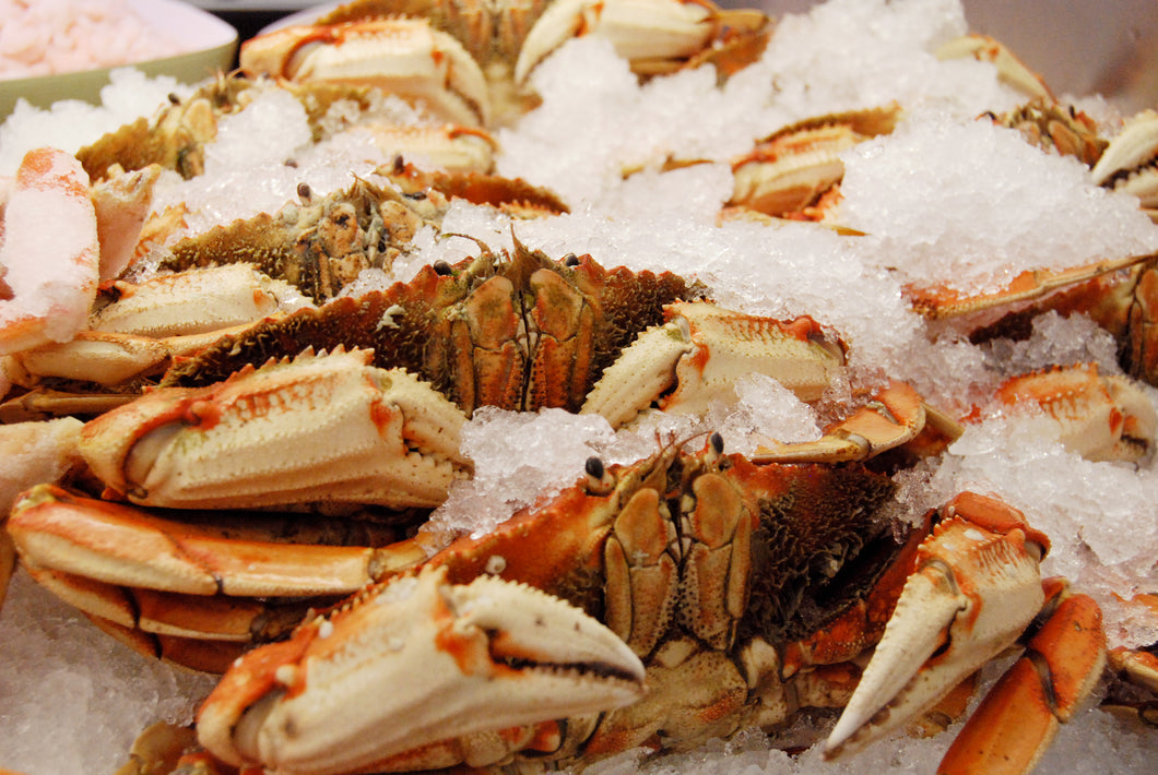 Jumbo Whole Cooked Dungeness Crab - 10 LBS