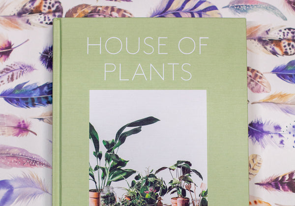 House of Plants, living with succulents, air plants and cacti