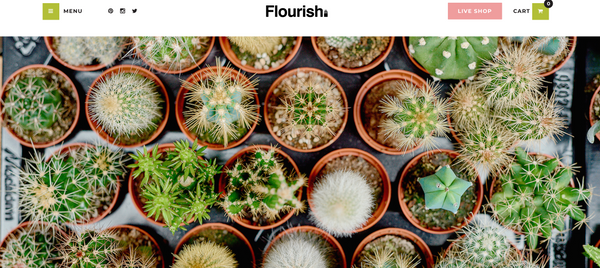 Where to buy Succulents in Manchester - Flourish
