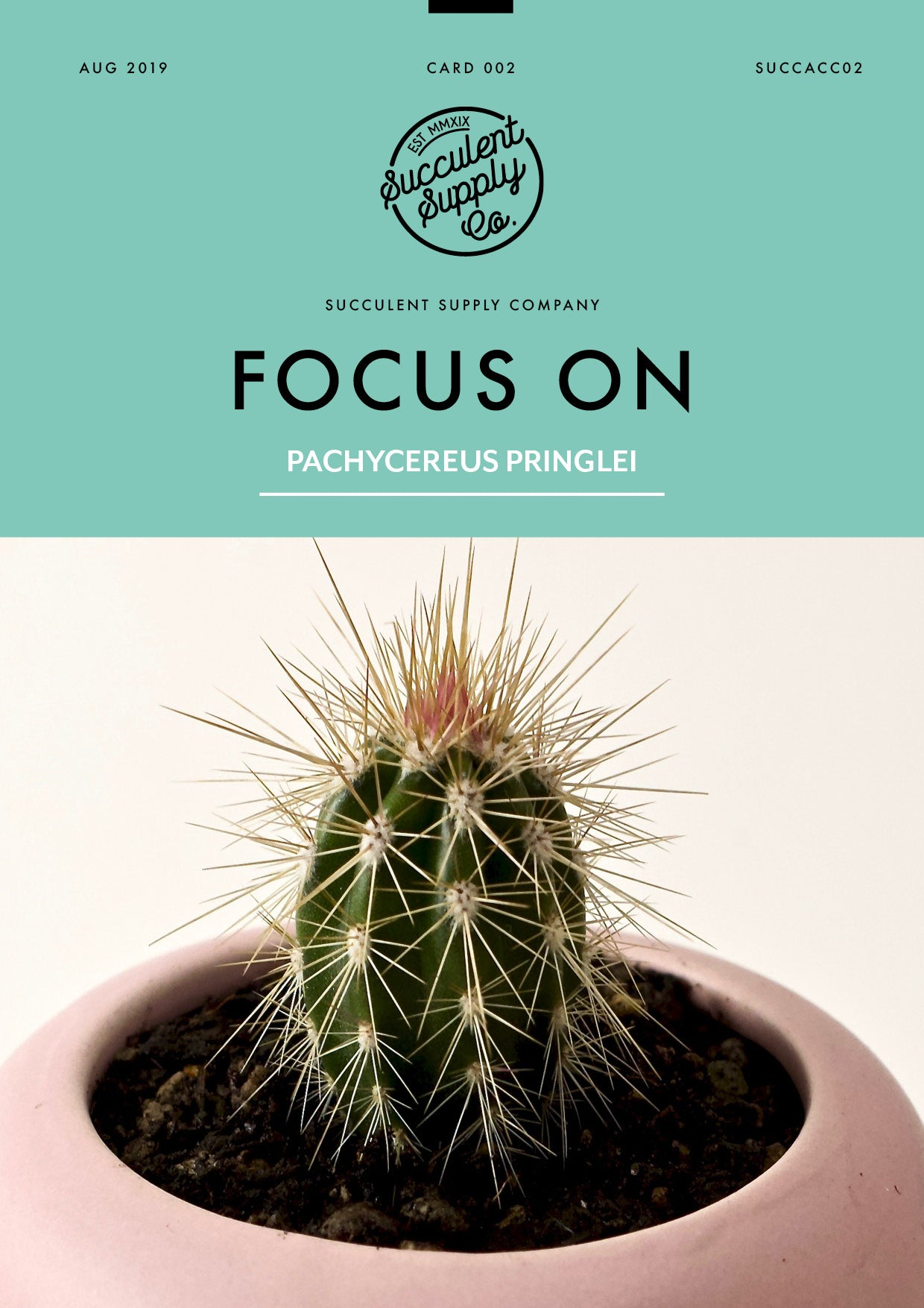 Focus on Pachycereus pringlei Cardon