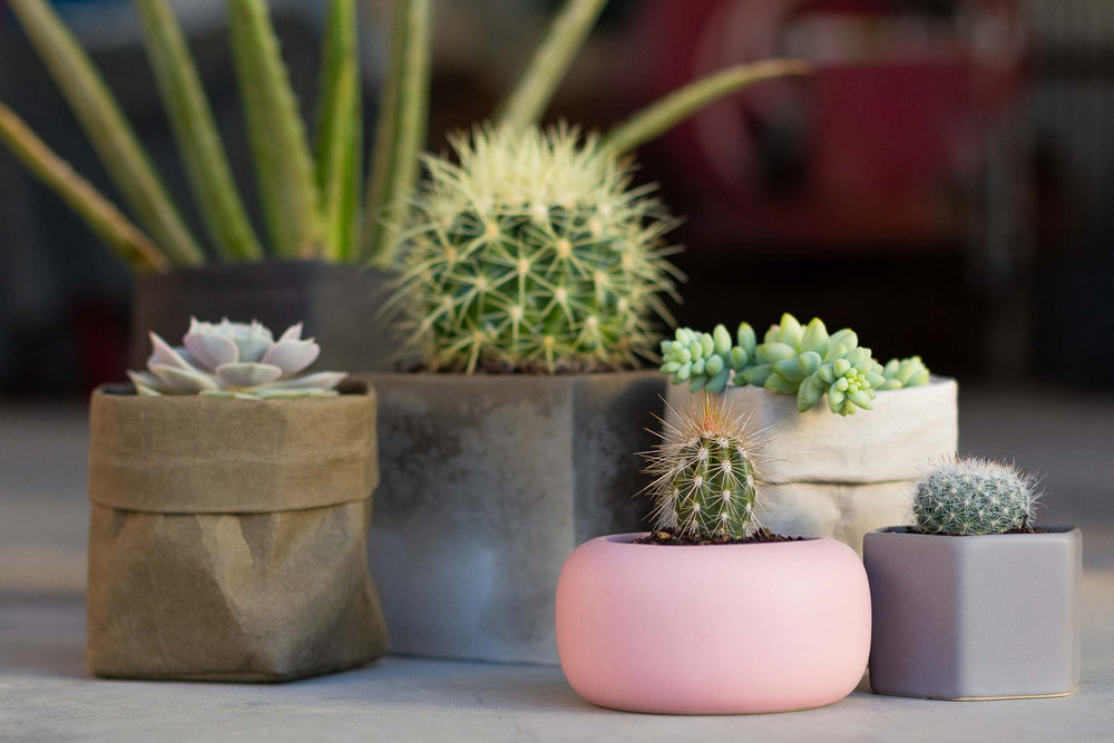 plant pots for succulents and cacti
