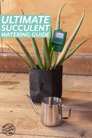 The ultimate succulent watering guide