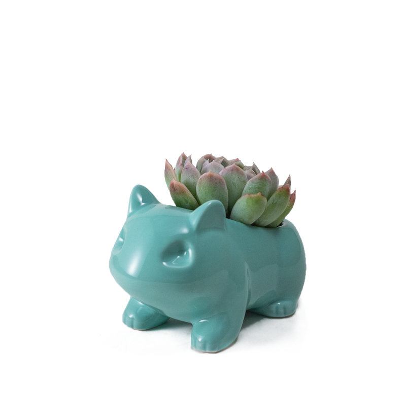 Pokemon plant pot our succulent-osaur is a cute plant pot perfect for succulents