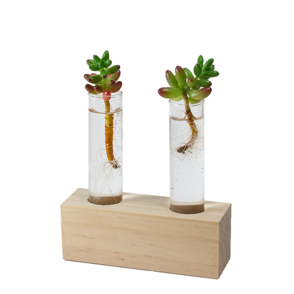 Test tube propagation station perfect for succulents