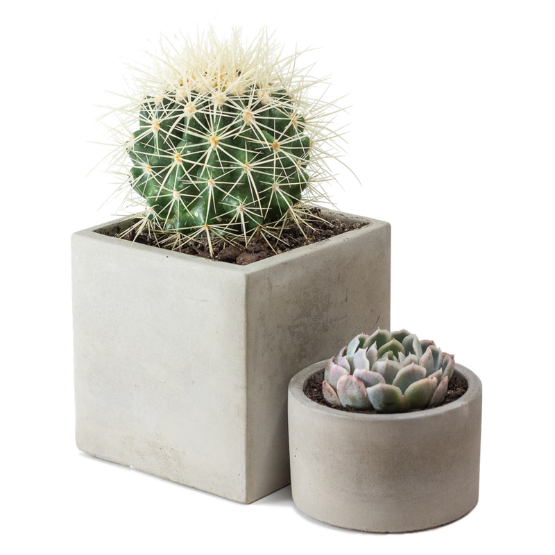 This large square concrete pot looks great with our smaller round concrete pot.
