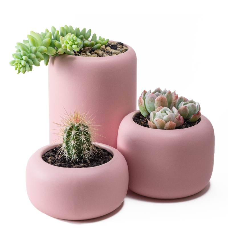 Beautiful ceramic plant pot for indoor succulents and houseplants in a matt finish. Blush pink colour set of 3 plant pots