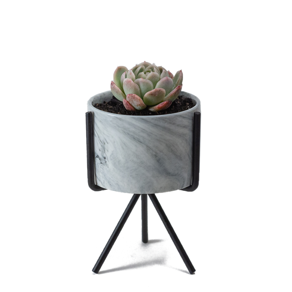 Small marbled pot with black metal stand with a small succulent inside