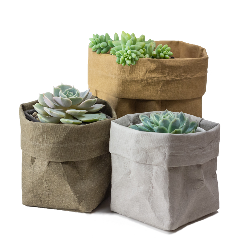 Kraft paper plant pots in different sizes and colours perfect for succulents and cacti