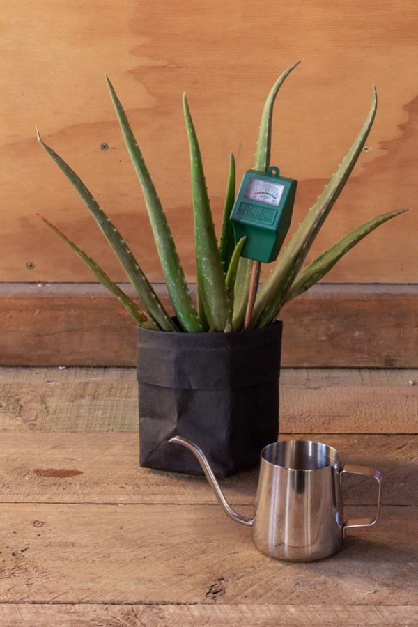 watering can for houseplants with moisture tester
