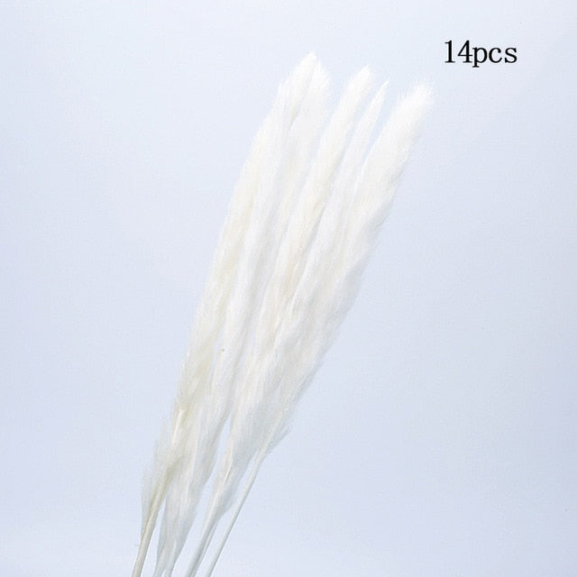30 pcs Natural Dried Rabbit Tail and Grass