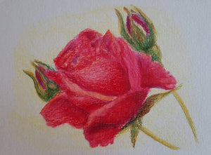 Greeting Card - Red Rose