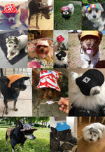 Dog Baseball Hat For Small Dogs