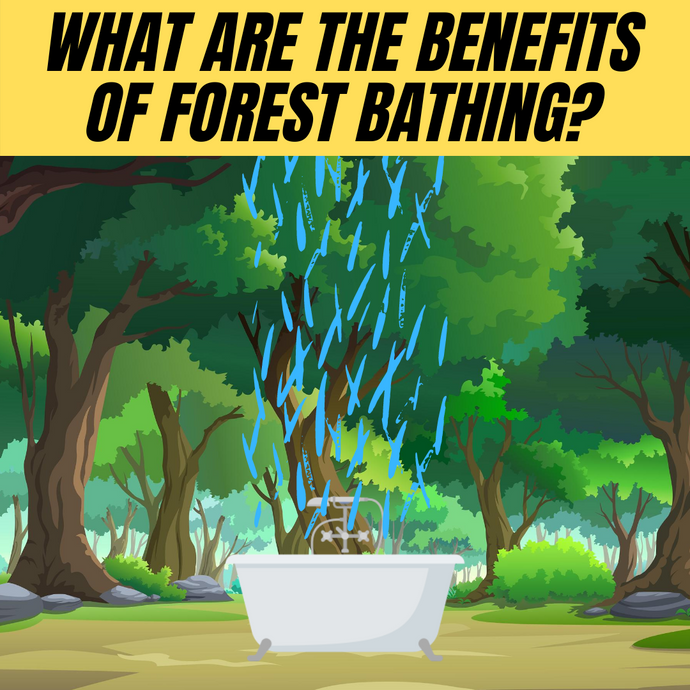 Forest bathing | natures 5 natural benefits