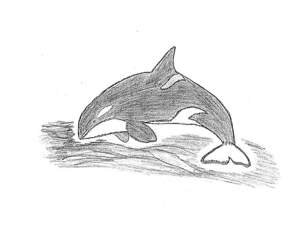 Scrimshaw - Orca Whale