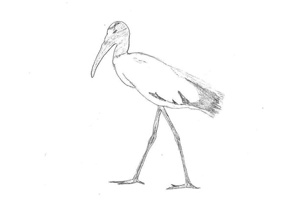Scrimshaw - The Wood Stork
