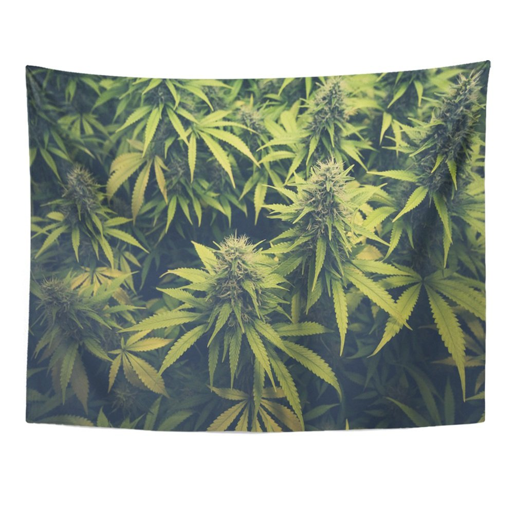 Print 60x80 Inches Green Weed Cannabis Bud Marihuana Plants Marijuana Sativa Hemp Indica Grow Farm Wall Hangings Tapestry Home