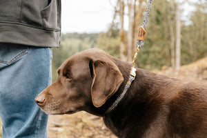 Asher House Leash (2 sizes)