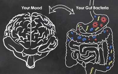 Hate stress? Love your gut