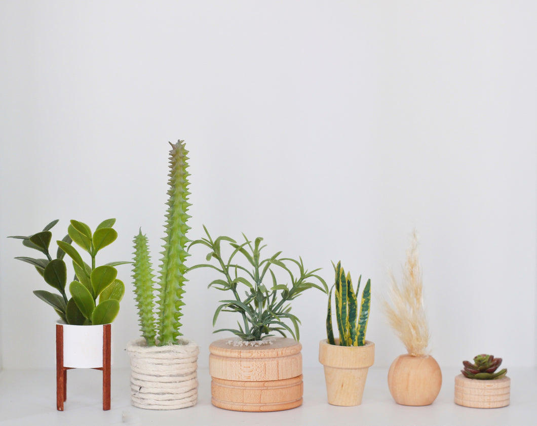 All the trendy plants (Premium)